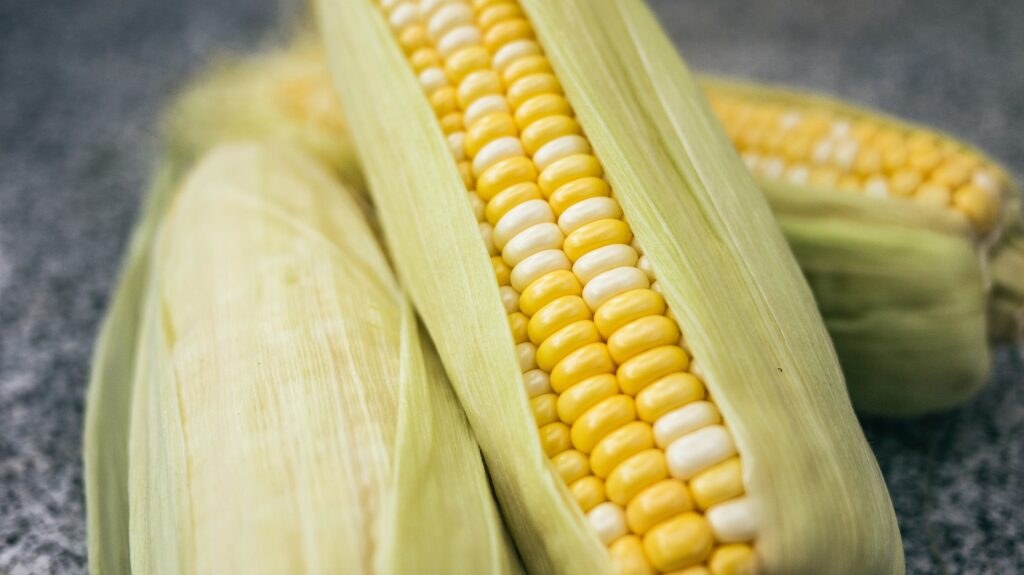 yellow and green corns