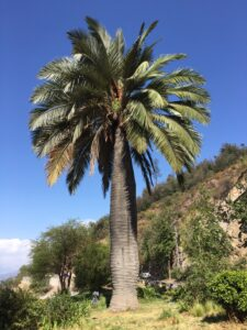 palm tree forrests